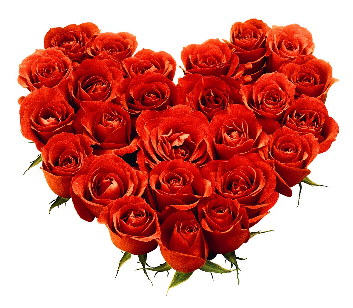Rose Png Love Flower 642