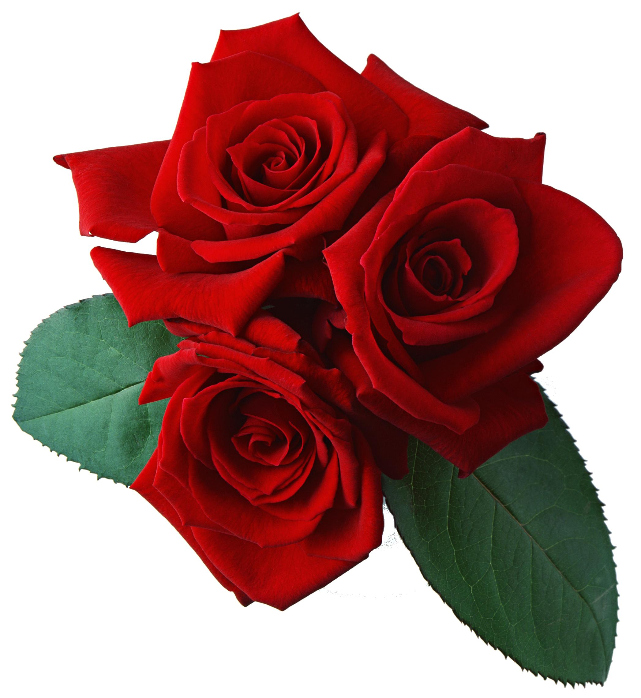 three red rose png flower batman logo vector free batman logo vector cdr
