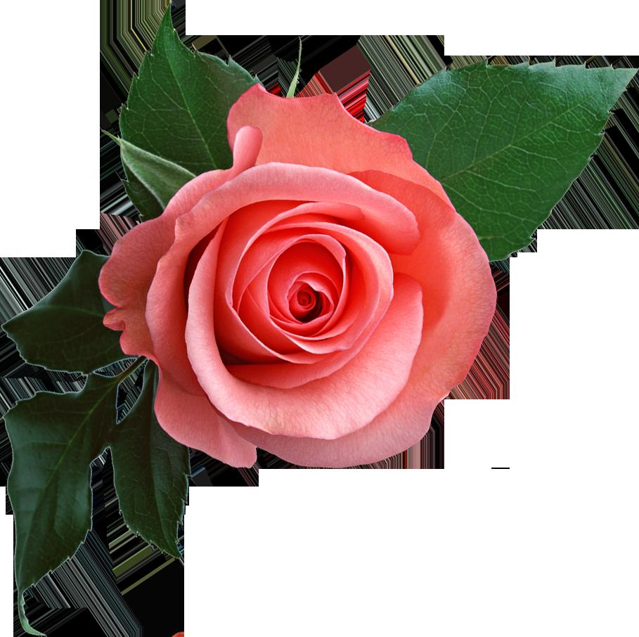 Pink flower clip art png