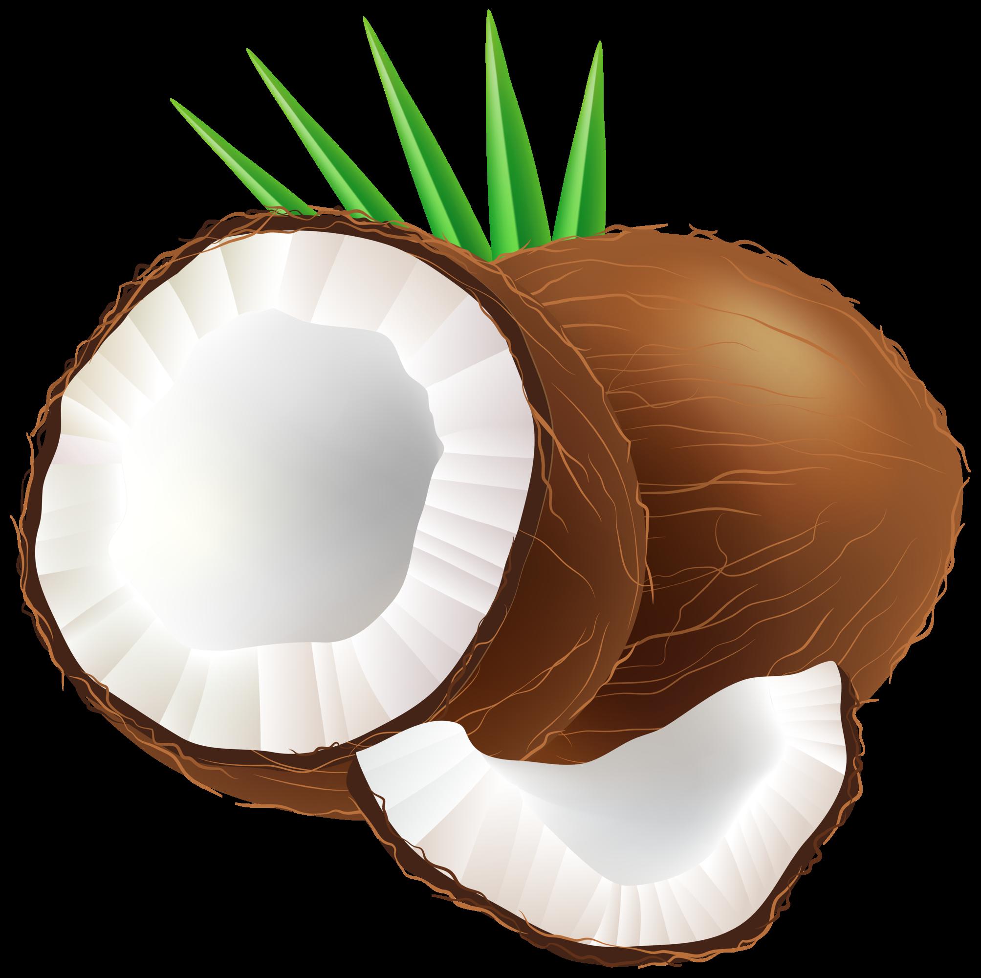 coconut png clip art rh clipart info coconut clip art black and white coconut tree clipart png