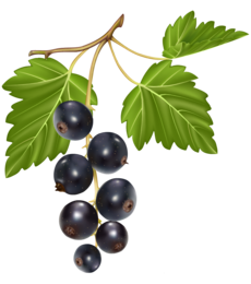 Blueberries PNG Clipart