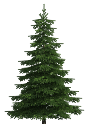 Realistic Pine Tree PNG Clip Art