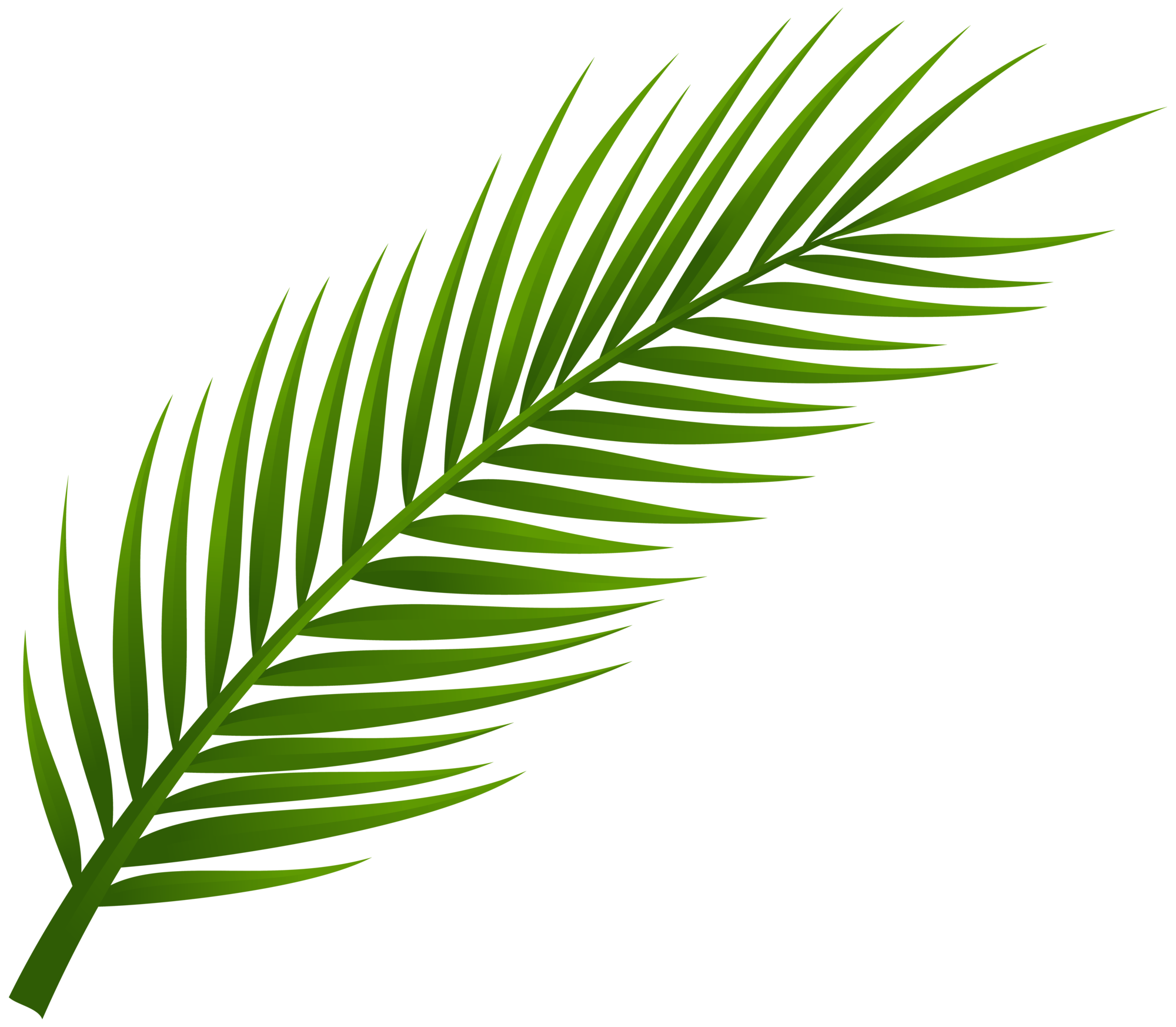 Palm Tree Leaves Clipart Palm Tree Leaf PNG Cli...
