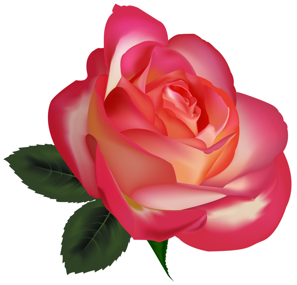 Beautiful Rose PNG ClipArtImage