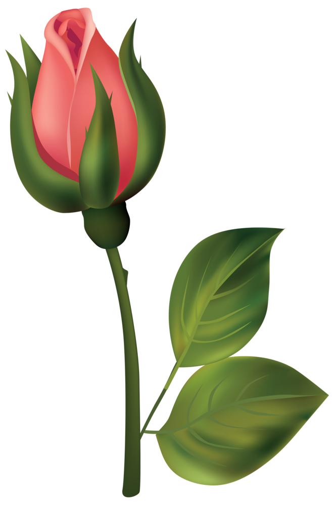 Stem Red Rose Bud PNG Clipart