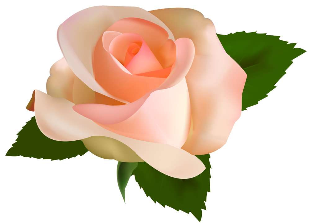 Beautiful Rose PNG Clipart
