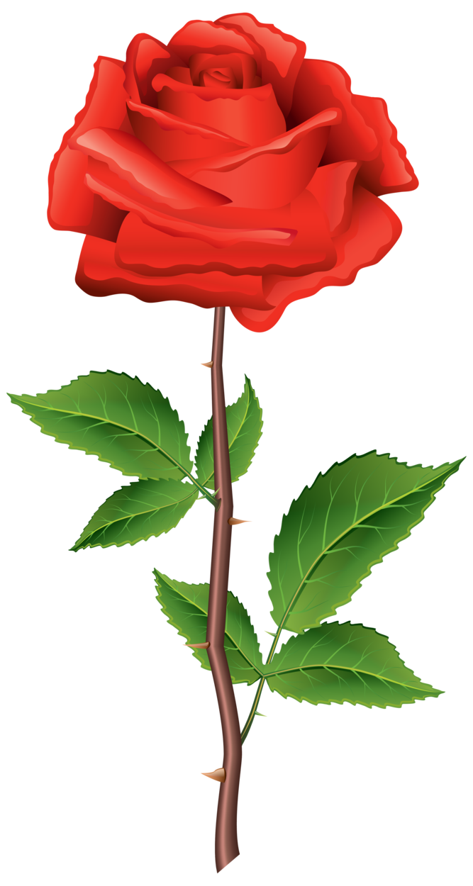 Stem Red Rose PNG Clipart