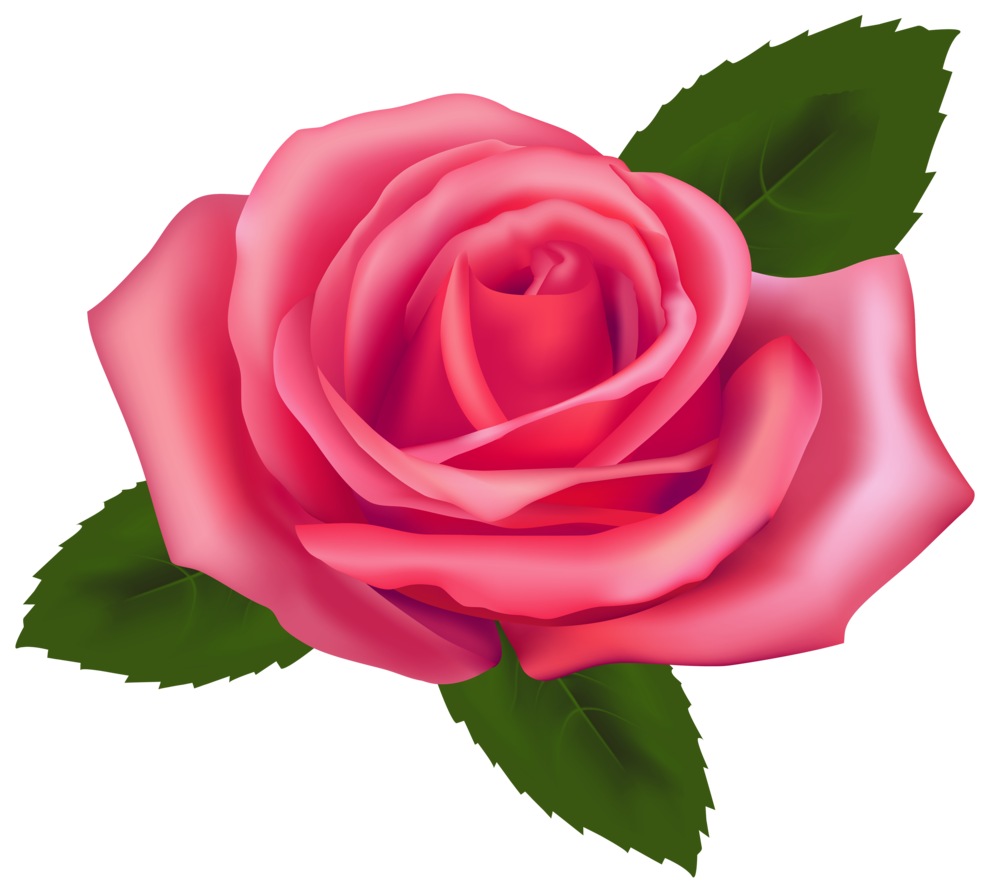 Beautiful Pink Rose PNG Clipart