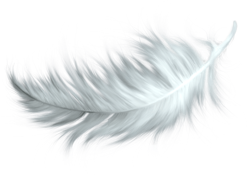 white feather transparent png