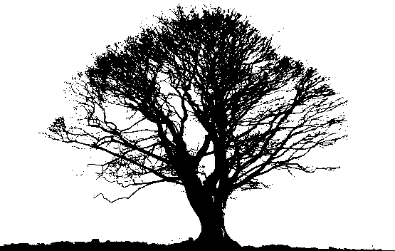 Black Tree PNG Photos