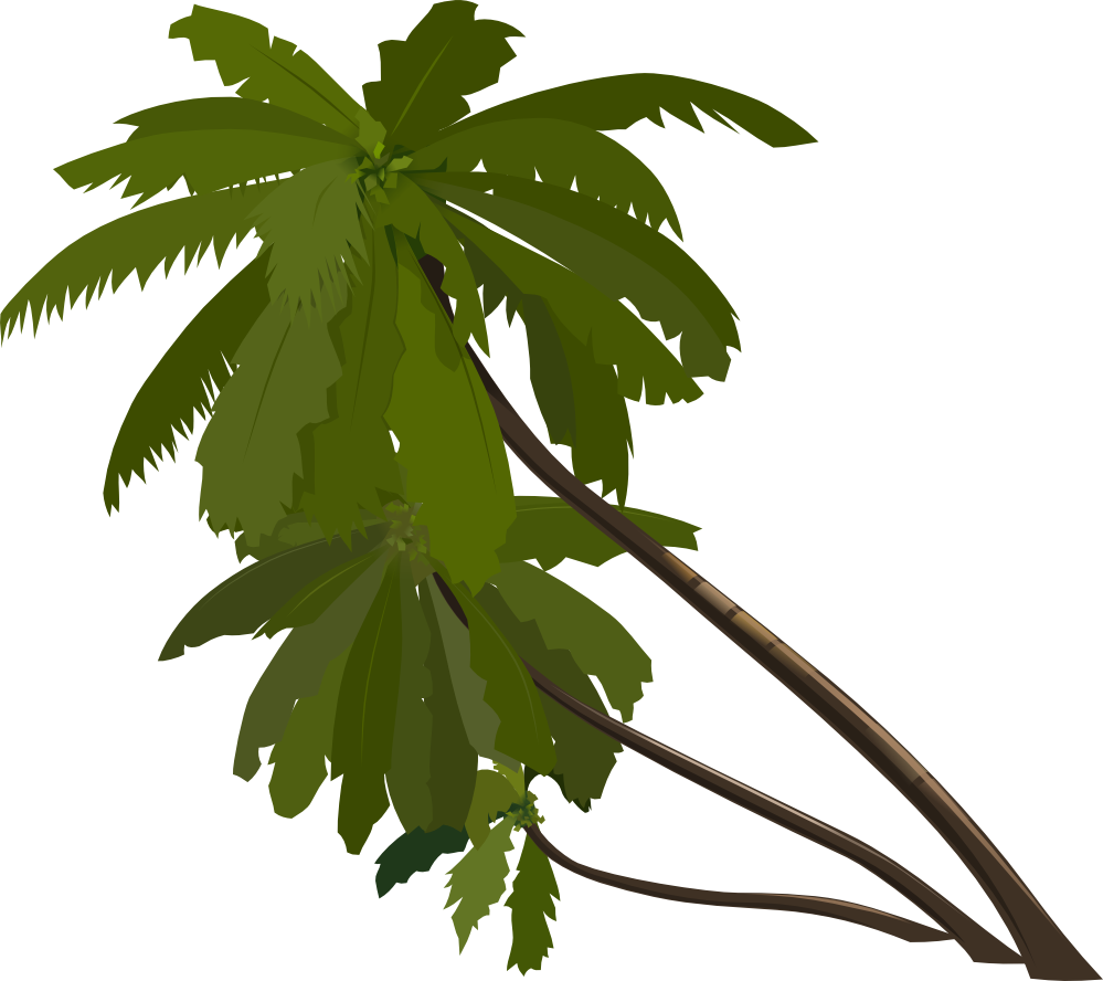 palm tree png image 2495