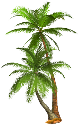 palm tree png image 2504