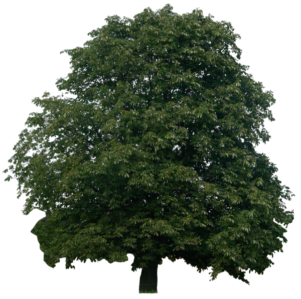 tree png 1380909741