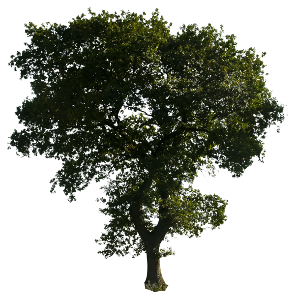 tree png 1380909797