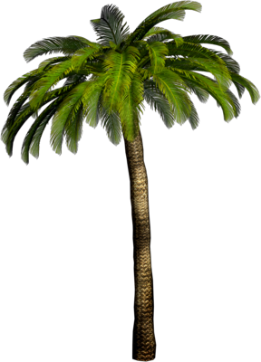 palm tree png image 2484