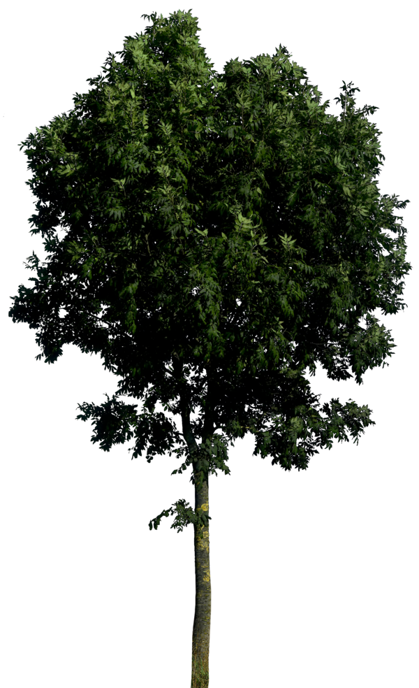 tree png 1380909801