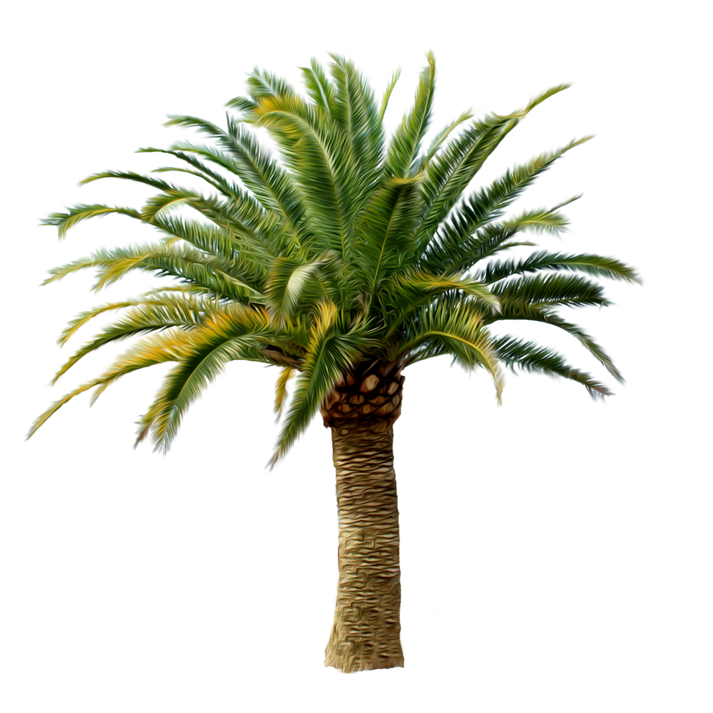 Palm Tree Png Image 2486