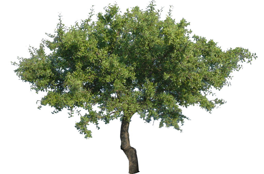 tree png 1380909738