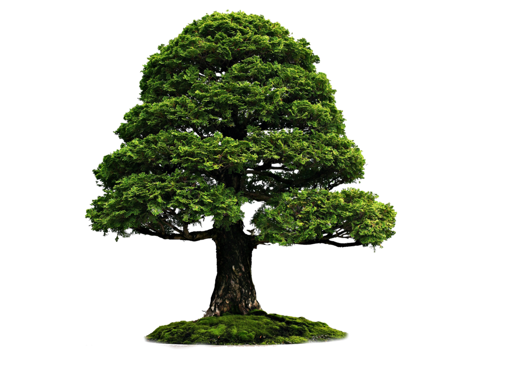 tree png 3495