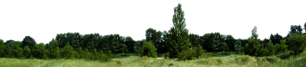 Forest Png Transparent Background