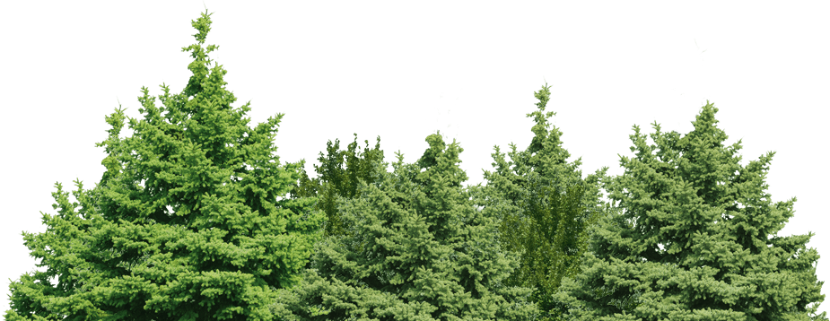 Forest Green Tree Png Clip Art Image
