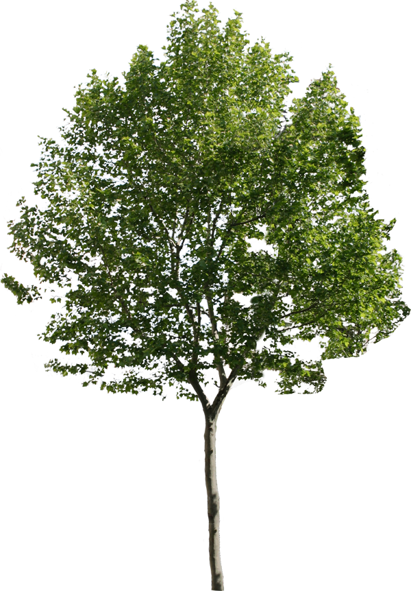 tree png 1380909875