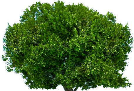 Tree Png 222