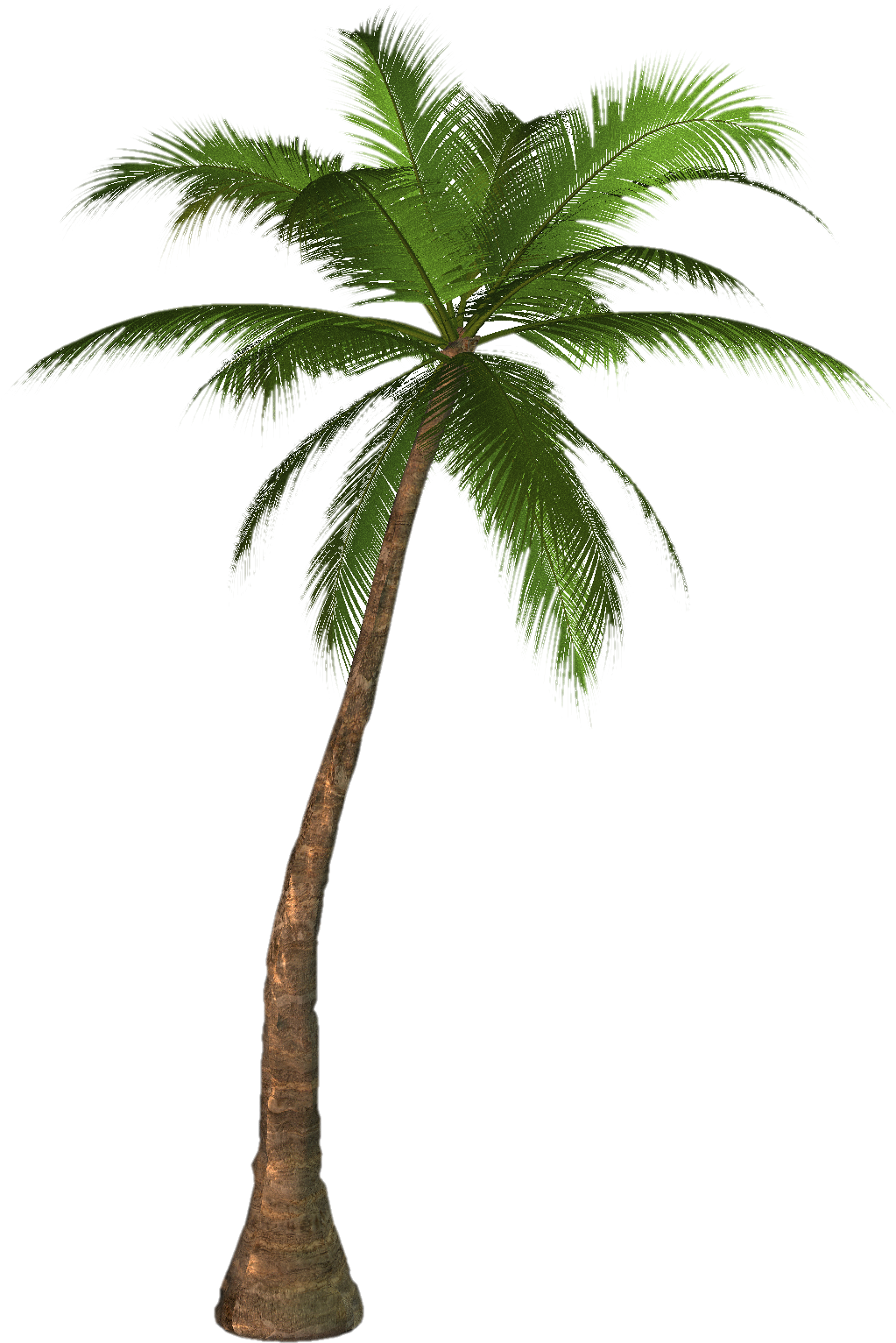 palm tree png image 2485