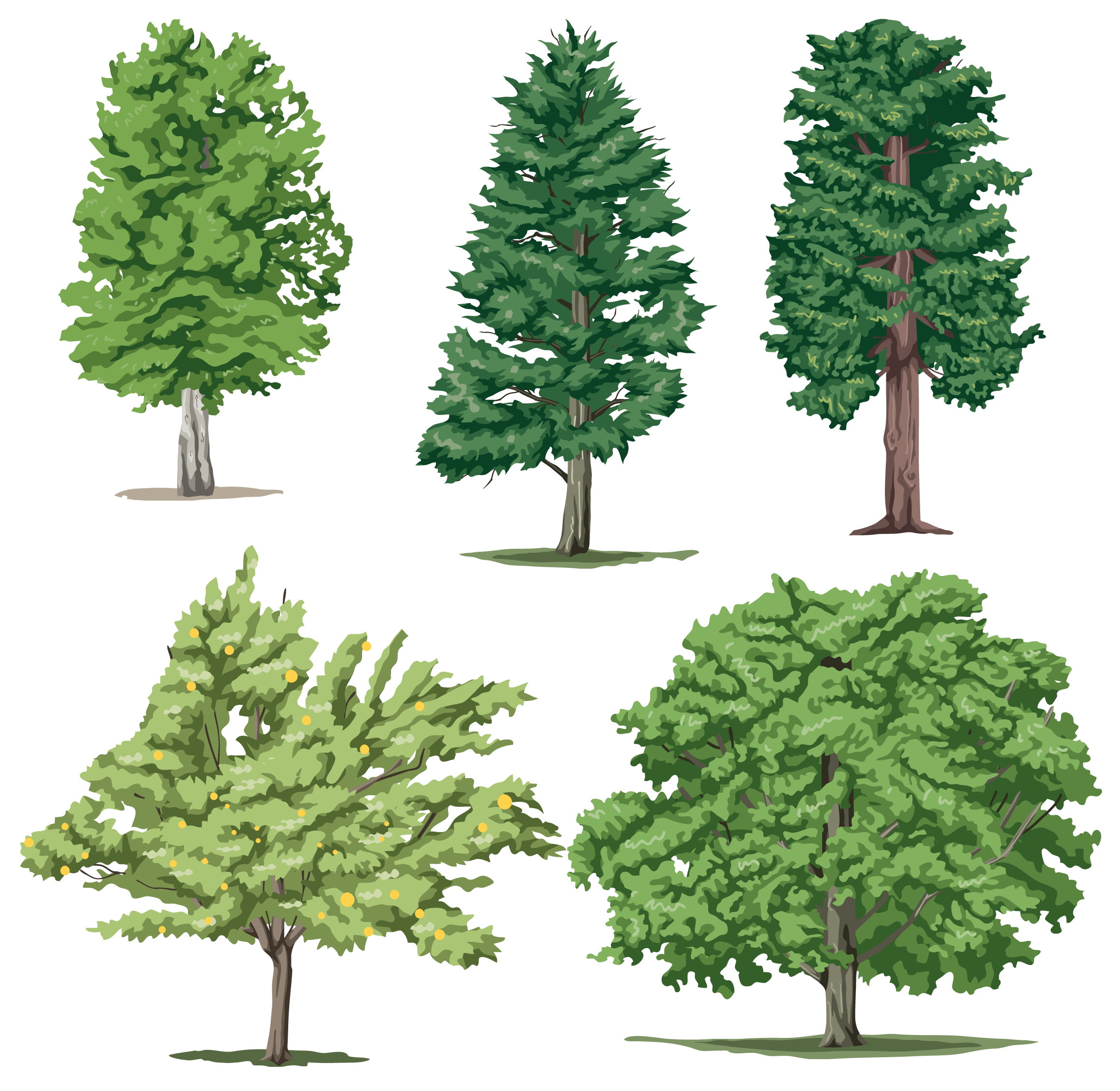 Tree Png Cartoon Realistic Trees All Types