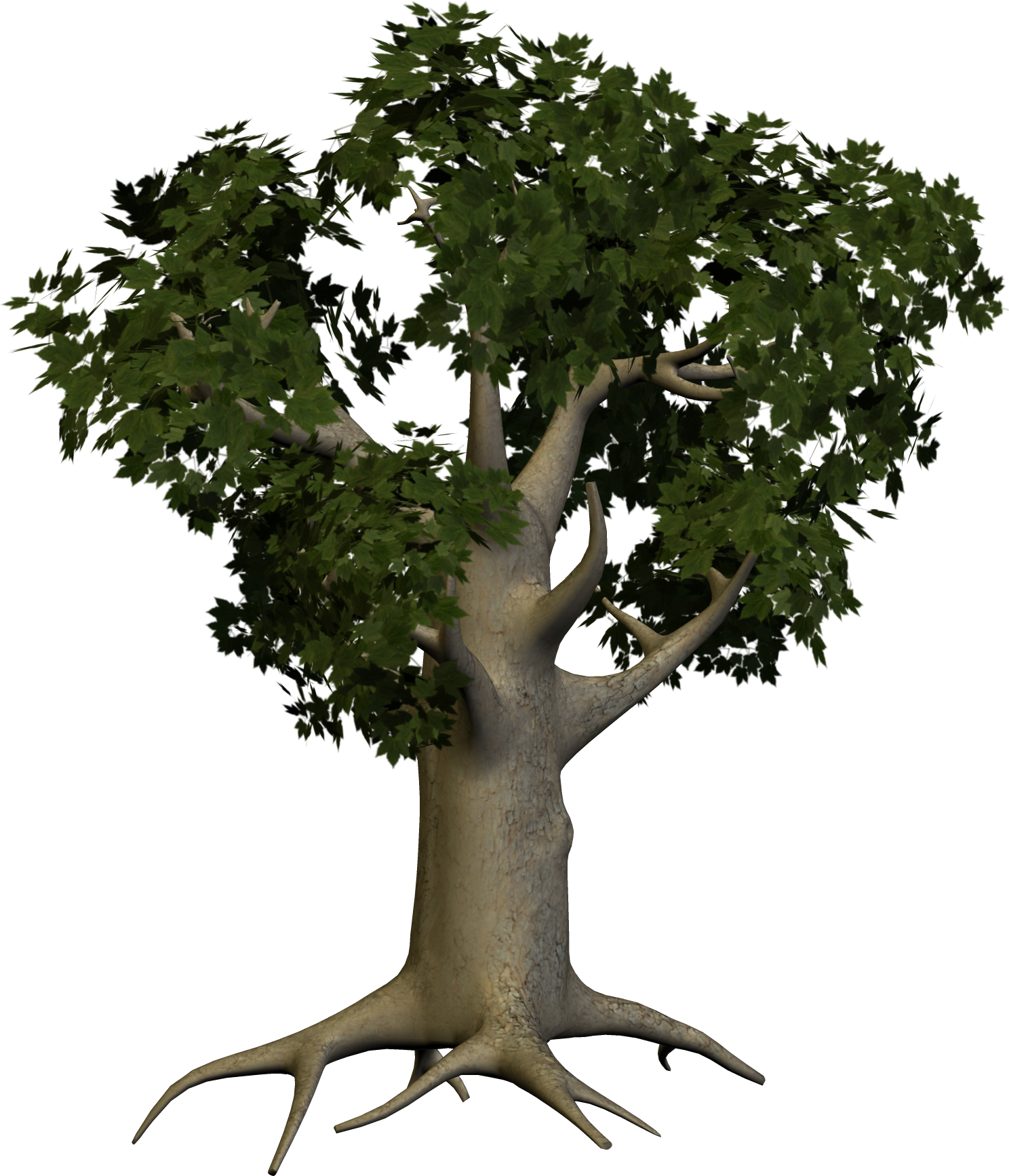 tree png 3480