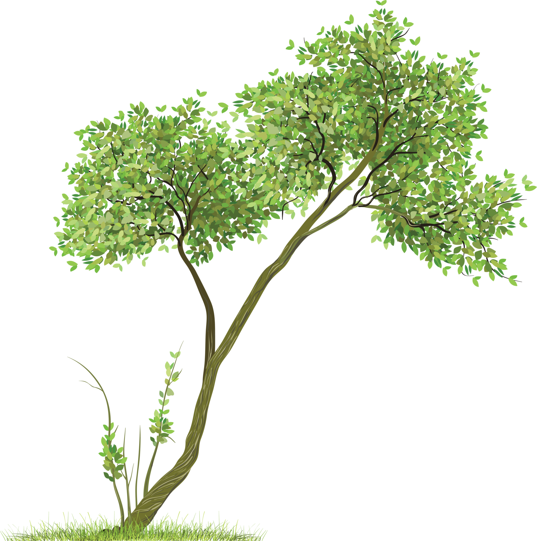 tree png 3494
