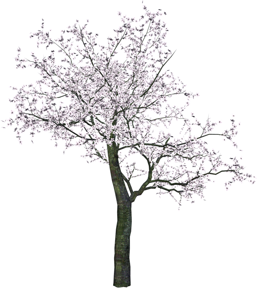 tree png 3475