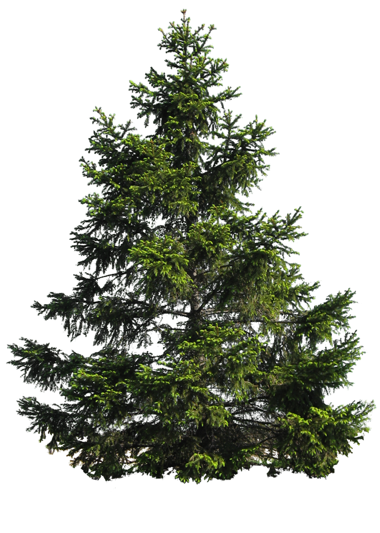tree png 206