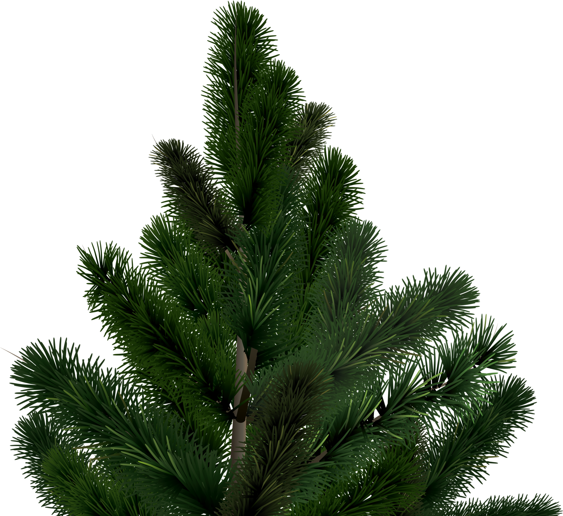 fir tree png transparent 3683