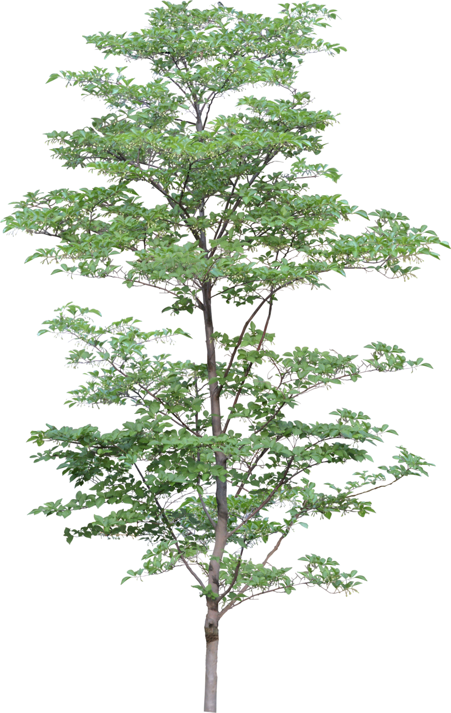 tree png 3473