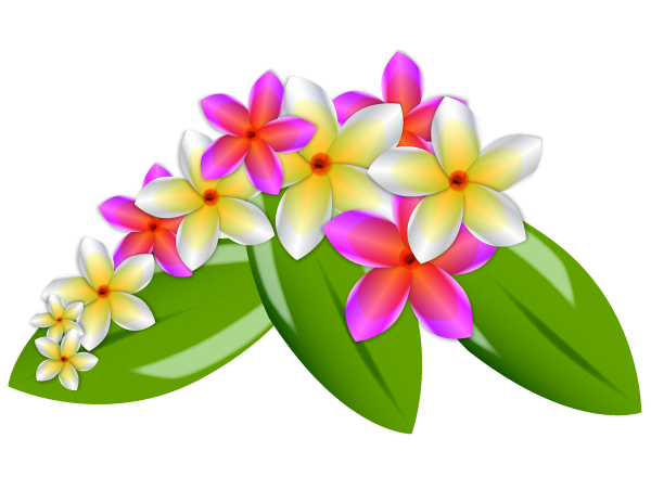 Plumeria Flowers Png Image