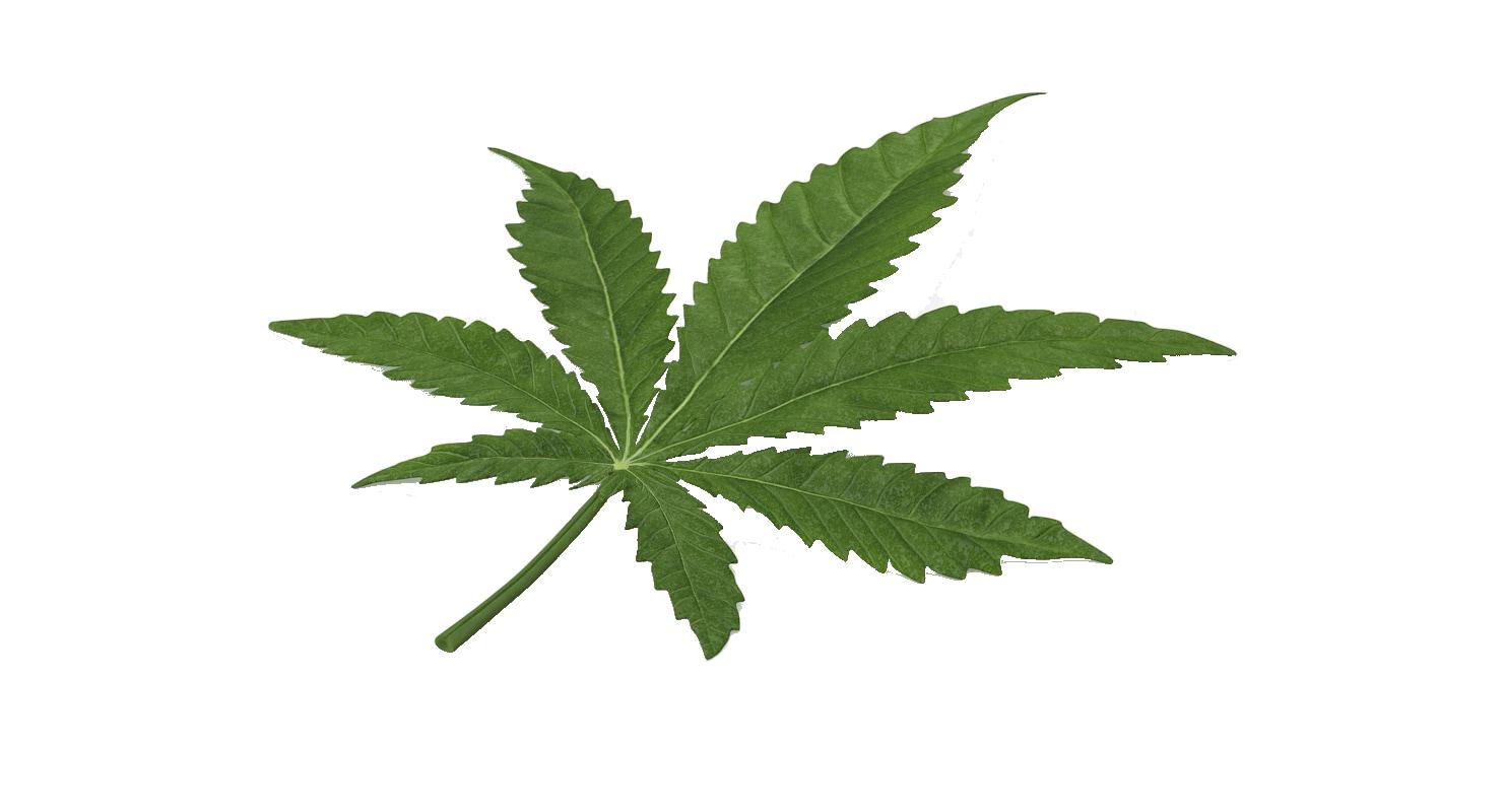 Marijuana Leaf Cannabis Hd Png