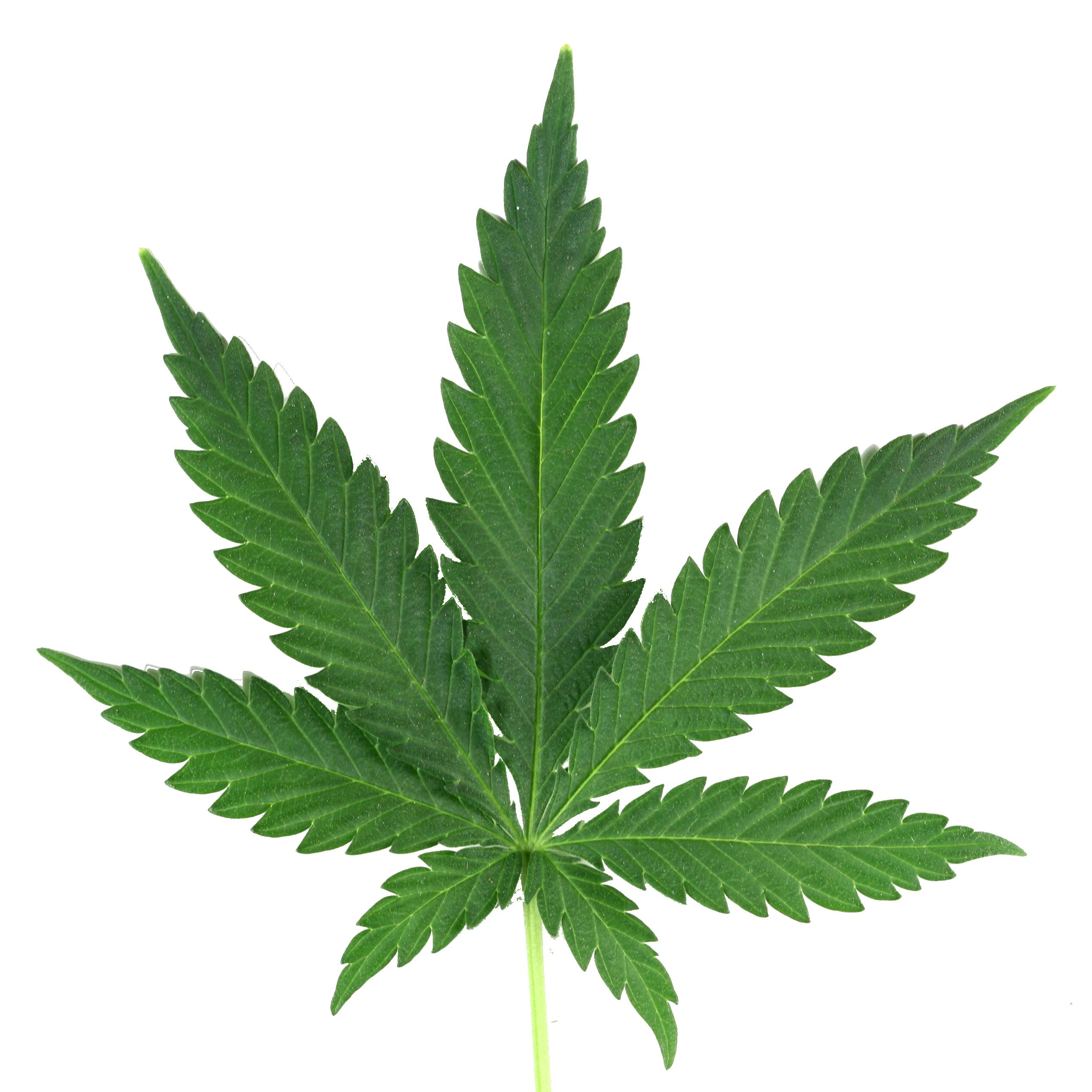 marijuana leaf png real rh clipart info  pot leaf clip art free