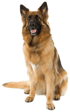 41 dog png image picture download dogs