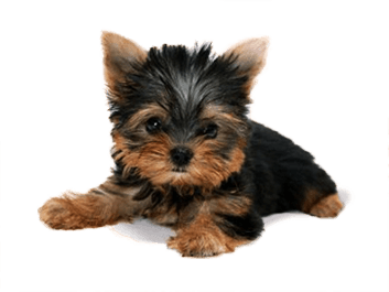 12 dog png image picture download dogs