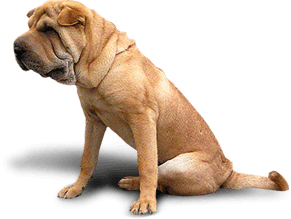 55 dog png image picture download dogs