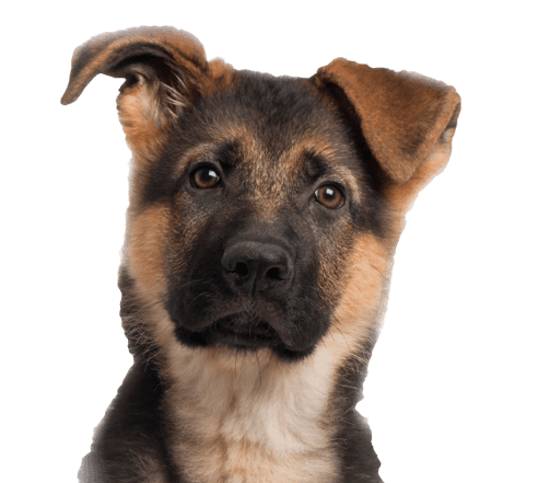 67 dog png image picture download dogs