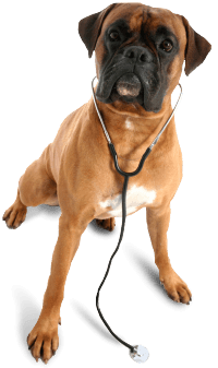 73 dog png image picture download dogs
