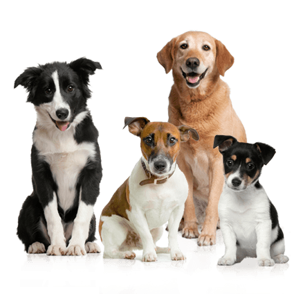 15 dog png image picture download dogs