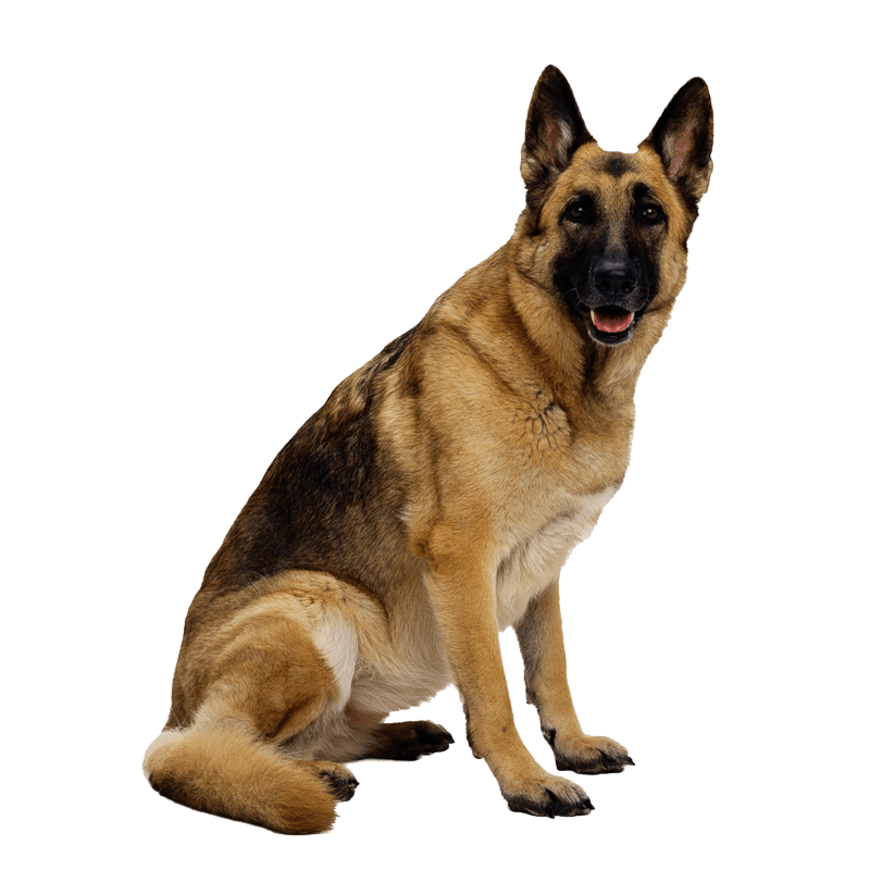 19 dog png image picture download dogs