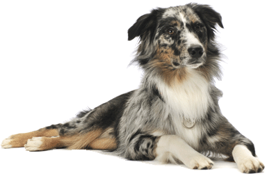 4 dog png image picture download dogs