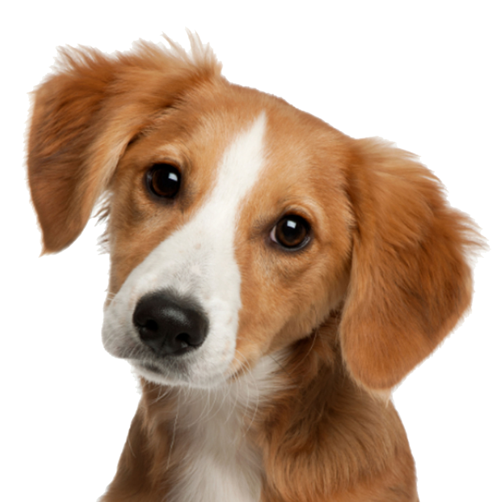 Cute Dog Face PNG Image