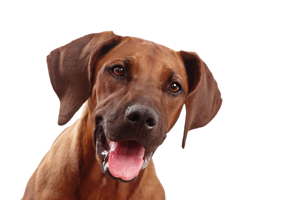 Dog Face Png 3