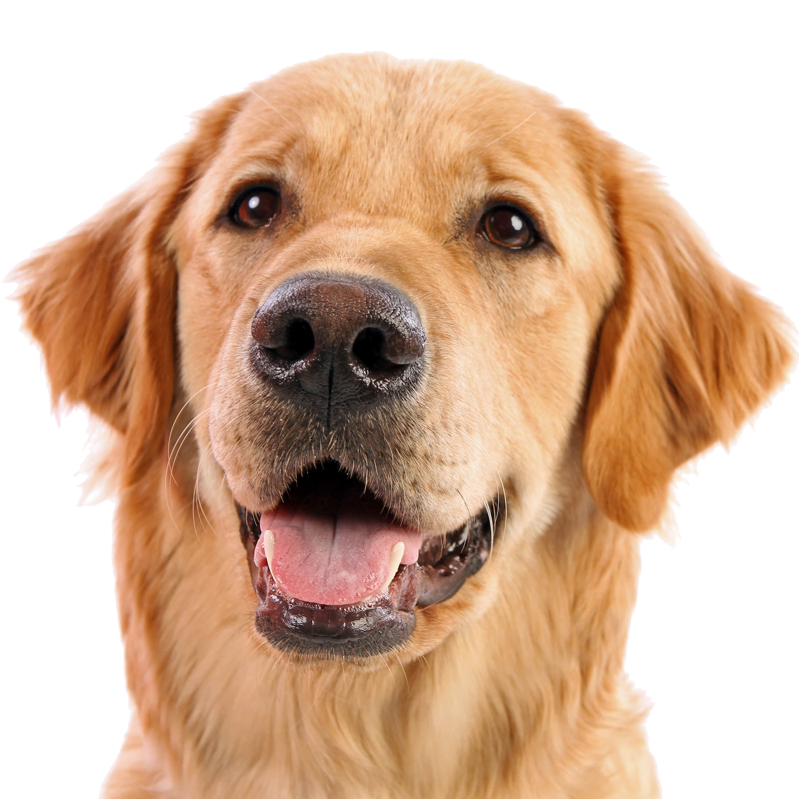 dog face png 2
