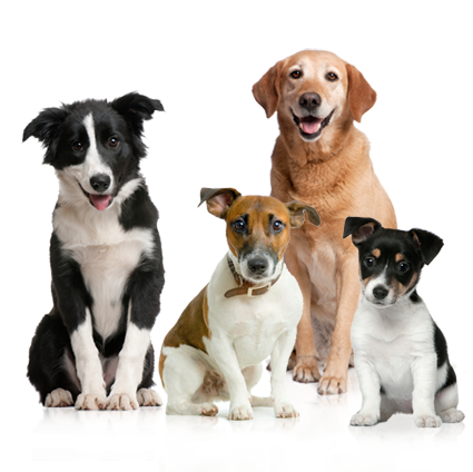 cute dog family png